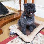 The Sherry-Netherland New York Pet Service